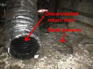 leaky-ducts-dead-possum
